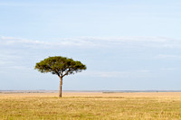 Mara Tree Photo