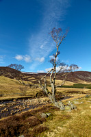 Clunie Water Tree Photo